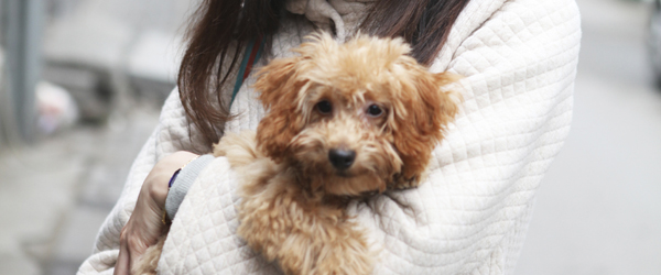 Image of small dog