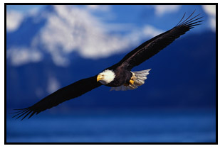 picture of an eagle