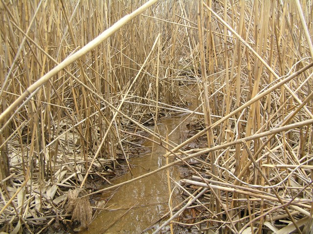 image 27 - a small stream runs through dry reeds