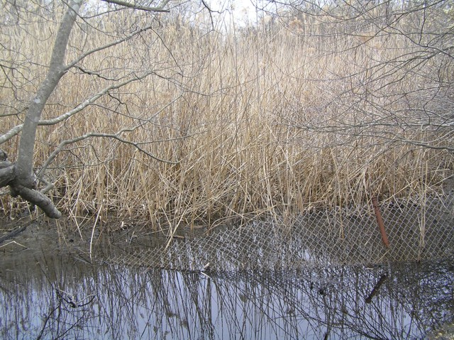 image 31 - a small bed of water with downed fenceline in it. trees and reeds are in the background