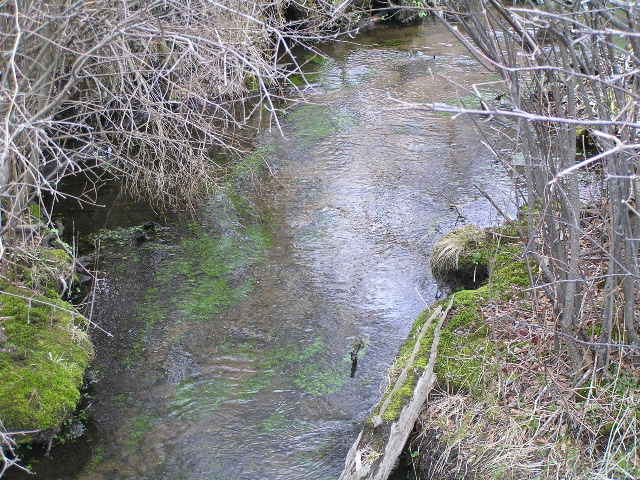 image 49 - a small stream with moss at the bottom cutting through reeds and grass