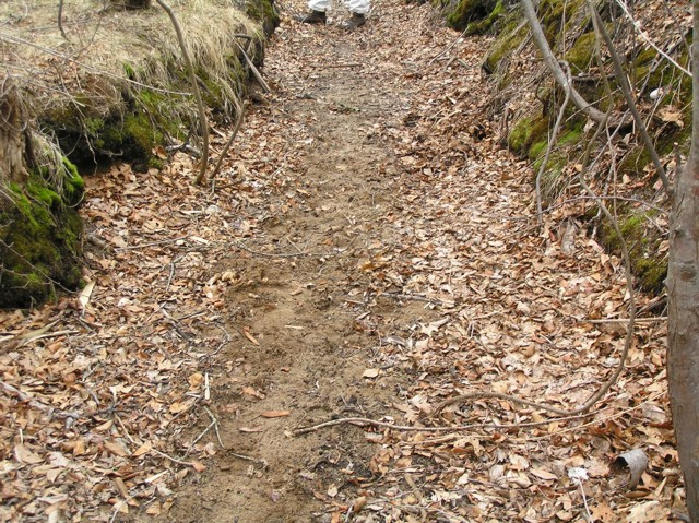 image 8 - a dirt path in the middle of the woods, a worker is a the end of the path
